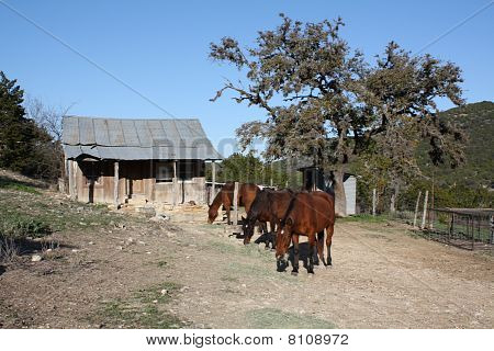 Old Barn and Horses
