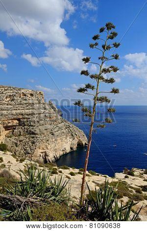 Blue Grotto Coast Malta