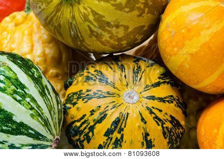 Colorful Pumpkins. Macro view