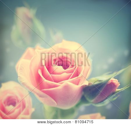 Beautiful Pink Roses. Vintage Styled card design. Retro style toned. Valentine's day bouquet. Soft focus