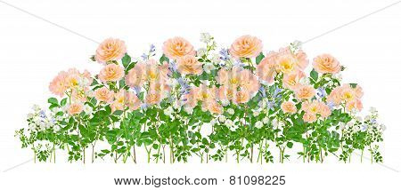 Montage Arrangement Of Flowers