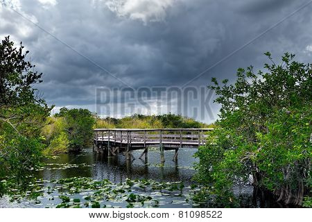 Trail in the Everglades