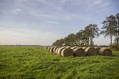 pic of haystack  - neat group of haystacks on a green field with trees and sky - JPG