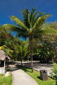 stock photo of playa del carmen  - Caribbean street Playacar Playa del Carmen Mexico - JPG