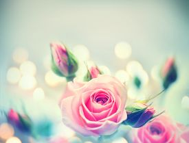 stock photo of valentine card  - Beautiful Pink Roses - JPG