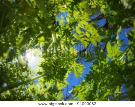 Defocused And Blurred Image Of Spring Plants