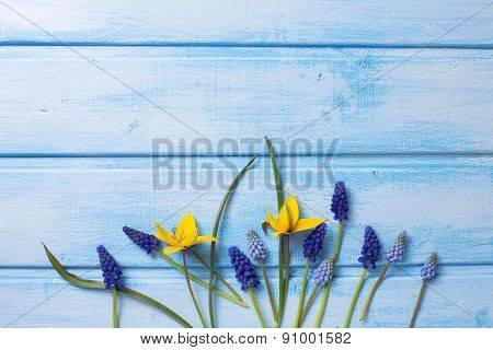 Background With Fresh  Muscaries  And Tulips Flowers