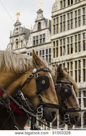 Horses in Antwerp