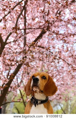 Funny cute dog near blossoming tree outdoors