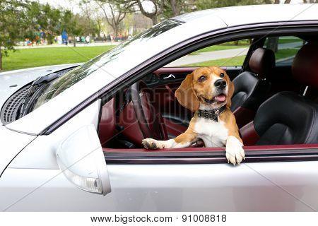 Funny cute dog in car