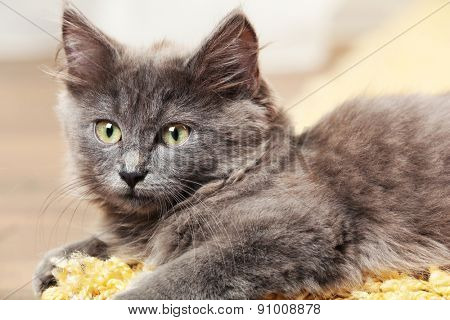 Cute gray kitten on carpet at home