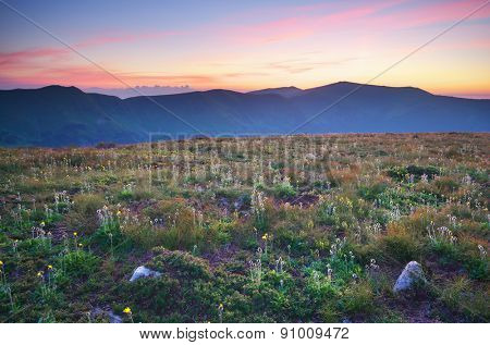 Meadow in mountain. Nature composition.