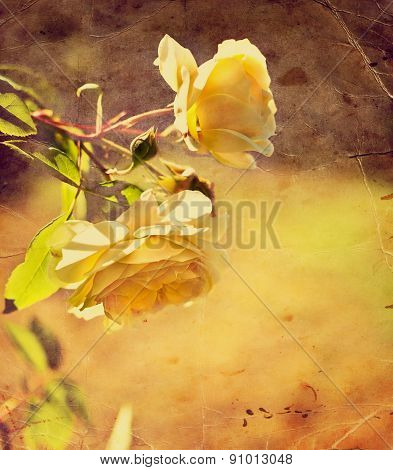 romantic background with yellow roses