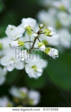 Beautiful wild white flower