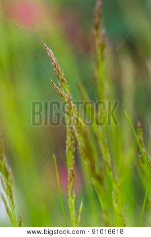 Macro photo of grass stems in vertical composition, low depth of focus