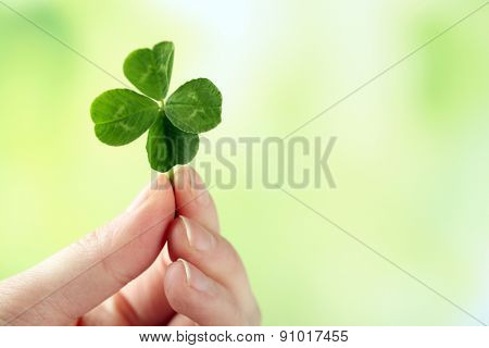 Female hand holding green clover leaf on nature background
