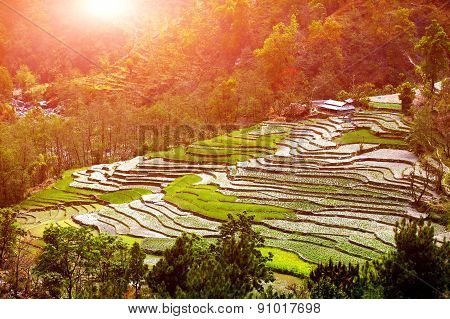 village and  rice field terraces