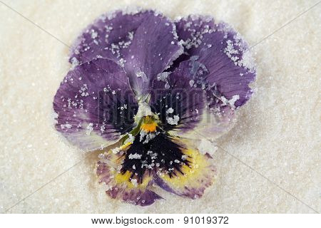 Candied sugared violet flowers, close-up