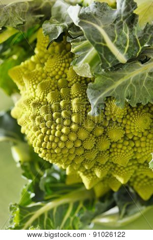 Romanesco broccoli, or Roman cauliflower