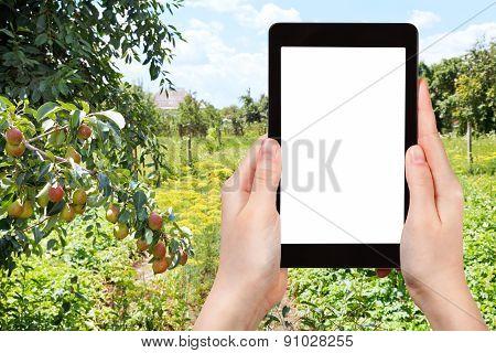 Photo Of Rural Garden On Backyard In Summer Day
