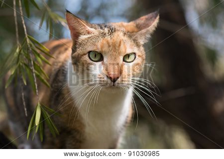 Portrait Of A Tri Colored House Cat