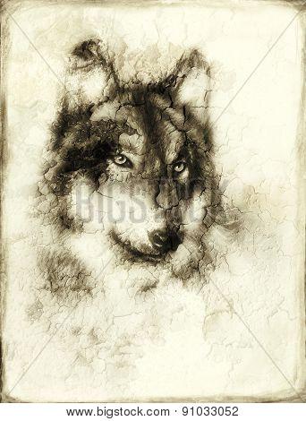 Illustration Portrait Of A Wolf, Crackle Background. Vintage Picture