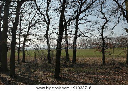 Bare trees in Northern Bohemia, Czech Republic.
