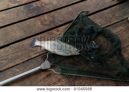 Trout. Trout fishing. Fishermen catch trout. Freshly caught trout