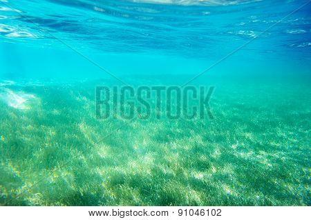 Green Grass Underwater