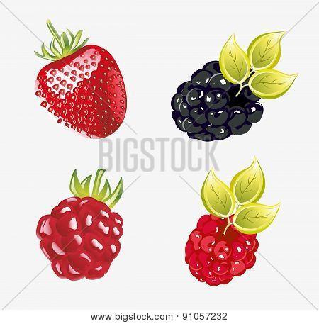 Set of fresh berries Vector illustration