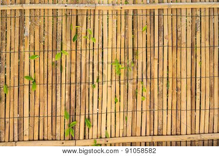 Bamboo Wall With Growing Plants
