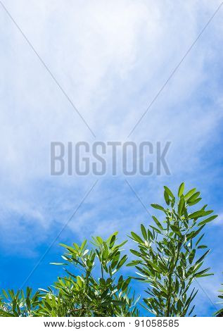 Leaves With Cloud And Sky