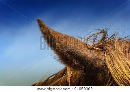 The horse's ears against the sky