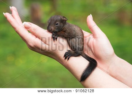 small squirrel in human hand closeup