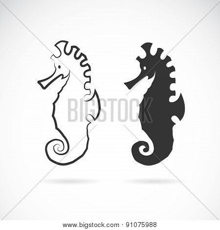 Vector Image Of An Sea Horse On White Background