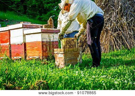 Work In Apiary