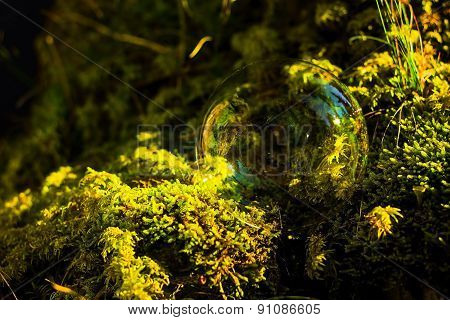 Soap Bubbles In Front Of The Forest In Moss