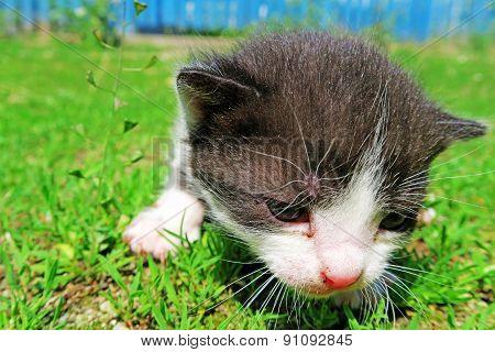 Adorable Pussycat