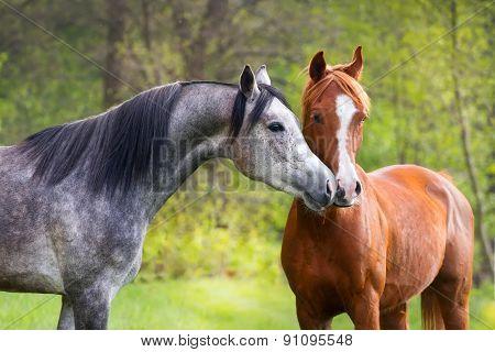 Couple of arabian horse