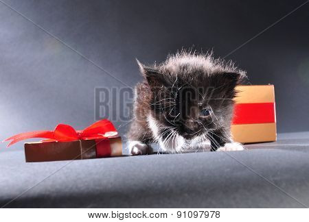 Black Kitten From Present Box
