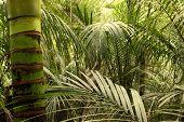 picture of jungle  - Lush green foliage in tropical jungle  - JPG