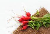 stock photo of sackcloth  - First spring harvest of vegetables - JPG