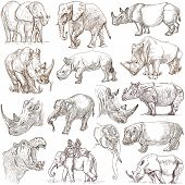 stock photo of rhino  - HEAVY ANIMALS  - JPG
