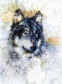 image of wolf-dog  - Illustration Portrait of a Wolf crackle background - JPG