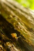 pic of na  - na ture from thai land snail  - JPG