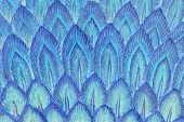 picture of spears  - abstract stucco art of peacock feather in spear shape - JPG