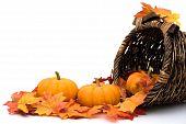 picture of cornucopia  - Fall leaves with pumpkins in a Cornucopia Autumn scene - JPG