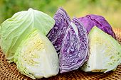 pic of water cabbage  - Cut organic green and purple cabbage in closed - JPG