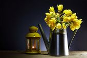 picture of daffodils  - Yellow daffodil flowers in metal watering can near lantern on dark background - JPG