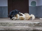 stock photo of stray dog  - Two stray dogs fighting near the garbage can - JPG